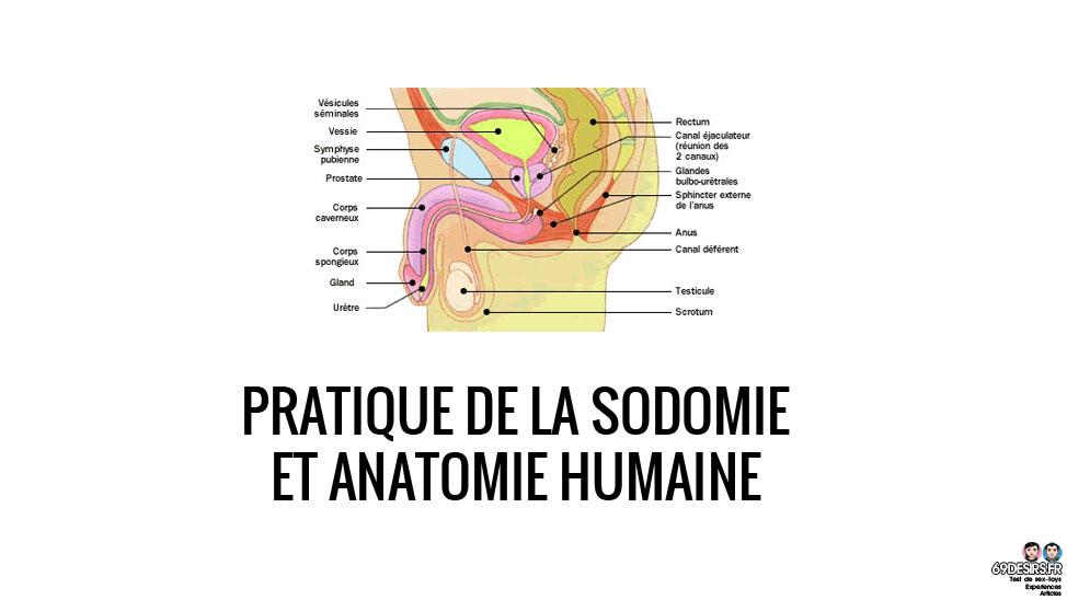 Pratique de la sodomie et anatomie humaine