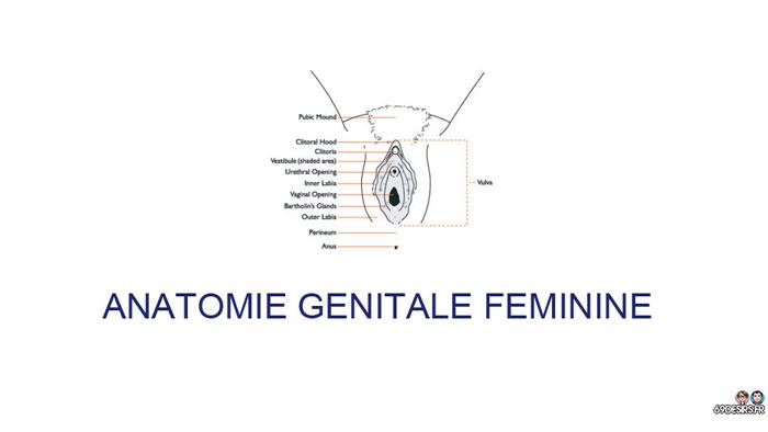 sexe oral - anatomie externe